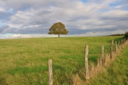 photo paysages perspective ciel arbre et ciel les arbres by cathys catherine champernau : arbre et ciel