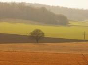 photo paysages champs couleur by ca : champ couleur