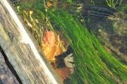 photo scene de genre sous le pont by cath : sous le pont