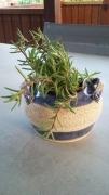 sculpture pot pourpier : pot pour plantes