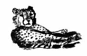 dessin animaux guepard felin savane afrique : Guépard
