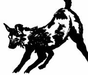 dessin animaux licaon chien sauvage afrique : Licaon I