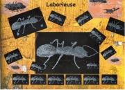 sculpture animaux fourmi acie inoxydable fil d acier : Laborieuse