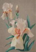 tableau fleurs fleur iris : iris saumon