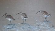 tableau animaux courlis oiseau marais mer : Trois courlis