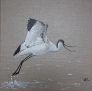 tableau animaux avocette oiseau envol marais : AVOCETTE, L'ENVOL