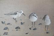 tableau animaux oiseau becasseau mer decoration : Trois bécasseaux sur la grève