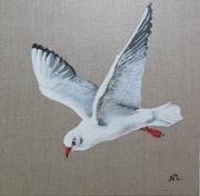 tableau animaux mouette oiseau mer decoration : Mouette Rieuse
