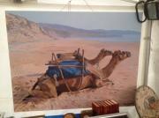 tableau animaux camel chameau desert chameaux dromadaire beach desert plage canvas paintin : Camel chameau desert