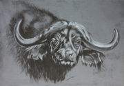 tableau animaux buffle art animalier dessin animalier de poret : BUFFLE