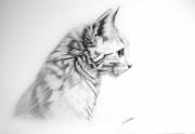 dessin animaux dessin animalier de poret artiste animalier chat : Dessin de Chat