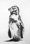 dessin animaux pingouin dessin animalier artiste animalier de poret : Croquis Pingouin