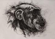 dessin animaux de poret dessin animalier artiste animalier singe : Portrait de Chimpanzé n° 7
