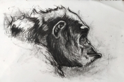 dessin animaux de poret dessin animalier artiste animalier singe : Portrait de Chimpanzé n° 6