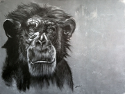 tableau animaux singe art animalier dessin animalier de poret : Grand Singe