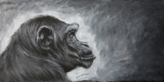 tableau animaux singe dessin animalier artiste animalier de poret : Singe