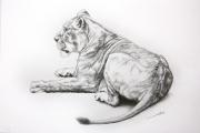 dessin animaux de poret lionne artiste animalier dessin animalier : Dessin de Lionne