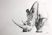 dessin animaux animal rhinoceros dessins de poret : Dessin rhinoceros