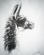 dessin animaux de poret dessin animalier artiste animalier lama : Lama