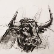 dessin animaux de poret dessin animalier artiste animalier taureau : Portrtait de Taureau