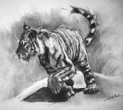 dessin animaux de poret dessin animalier artiste animalier dessin tigre : Tigre