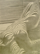 dessin nus nus ombre grafite : Beau Zebre