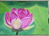 fleur de lotus, début d'épanouissement