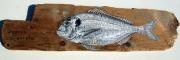deco design animaux poisson bois flotte daurade : Daurade / dorade royale