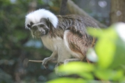 photo animaux animaux portrait nature : Lémurien