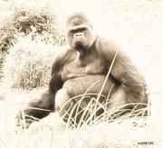 art numerique animaux nature animaux portrait : Gorille