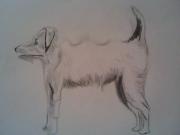 dessin animaux veterinaire chat loup ours : Dessin de chien
