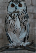 tableau animaux vie nocturne vision nocturne realiste oiseaux : Femelle Grand Duc