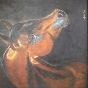 tableau animaux cheval : pur sang arabe