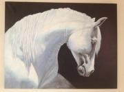 tableau animaux cheval : Etalon Lipizzan