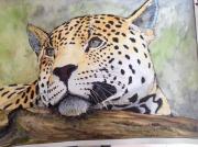 tableau animaux jaguard leopard : jaguard femelle