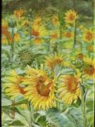 tableau fleurs fleur tournesol champs jaune : LES TOURNESOLS