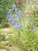 tableau fleurs iris provence sentier bleu : iris de provence