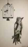 dessin animaux aquarelle oiseau cage encre : My little bird