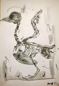 Squeleton Bird