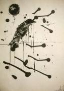 dessin animaux aquarelle oiseau illustration bird : Bird