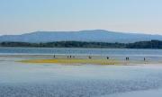 photo marine etang de la narbonna : Lagune