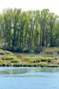 photo paysages rhone fleuve reflets arbres : Peupliers se reflétant dans le Rhône