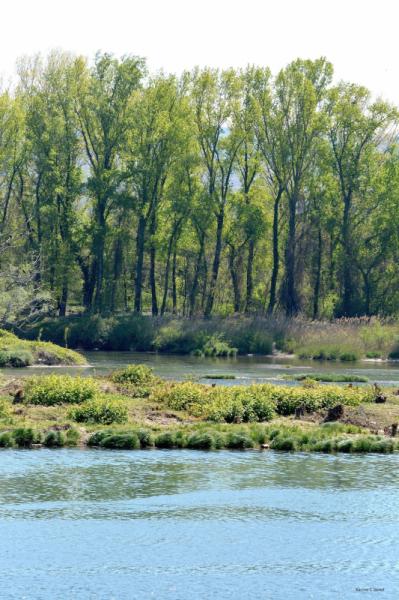 PHOTOGRAPHY Rhône (fleuve) reflets arbres Paysages  - Peupliers se reflétant dans le Rhône