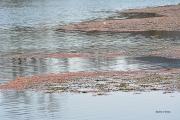 photo paysages le rioudard ardeche : Nuances de Rioudard