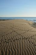 photo marine dune parc regional de la narbonnaise en mediterranee : Empreintes sur la dune (1)