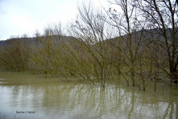 PHOTO plaine alluviale Rhône Paysages  - Plaine alluviale du Rhône