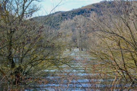 PHOTO Rhône forêt alluviale Ardèche Paysages  - Le Rhône en crue