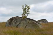photo paysages aubrac lozere granit : Arbuste sur un bloc de granit