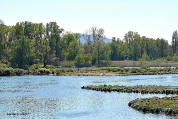 PHOTOGRAPHY Rhône (fleuve) colline de l'Hermitage Paysages  - Le cours du Rhône