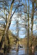 photo paysages foret alluviale rhone : Forêt alluviale du Rhône